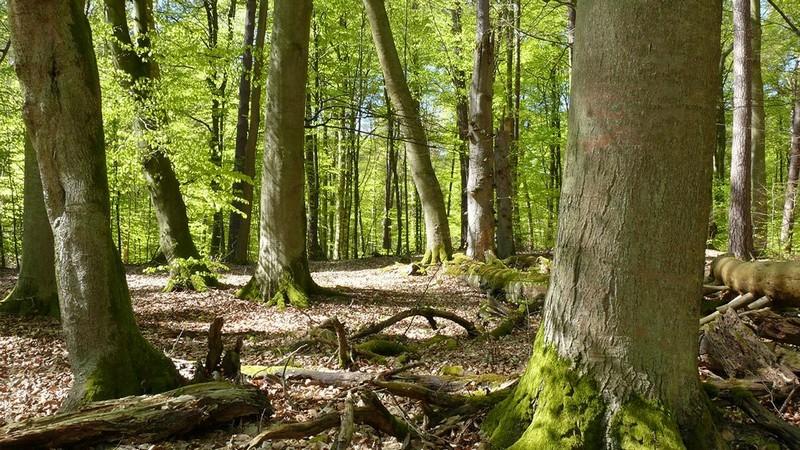 Parc national de Muritz